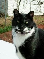 My Lulu (NH Pet Sitting)