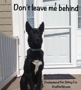 Merlin Professional Pet Sitting Etc.