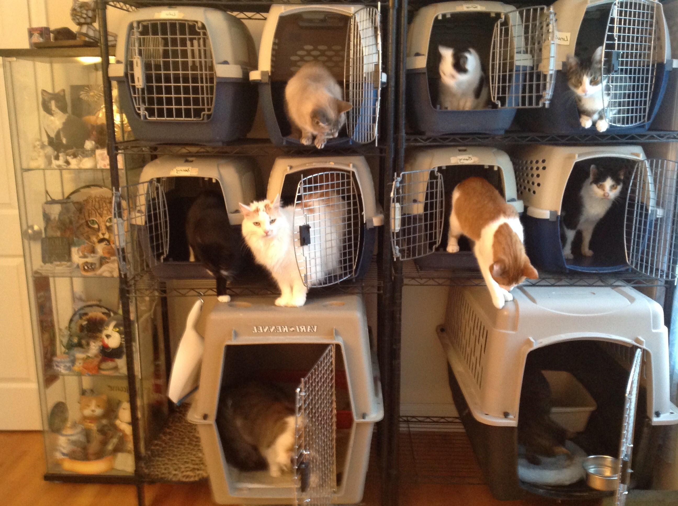 Feeding Time at our house!! Top Row - Linus, Spanky, Felice Middle Row - Ricky, Gus Bennett, Sazar, Lulu Bottom Row - Danny, Desilu By Professional Pet Sitting Etc.