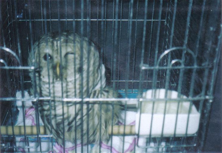Owl , Helped by Dori, Professional Pet Sitting Etc.