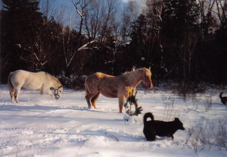 Trinity, white Horse, Quincy, palomino horse, Dule, black dog