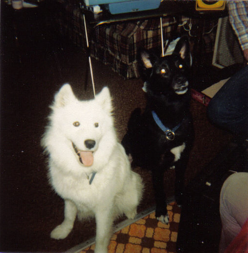 Duke, black husky mix and Prince, white samoyed