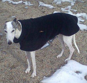 Sandy for Professional Pet Sitting Etc