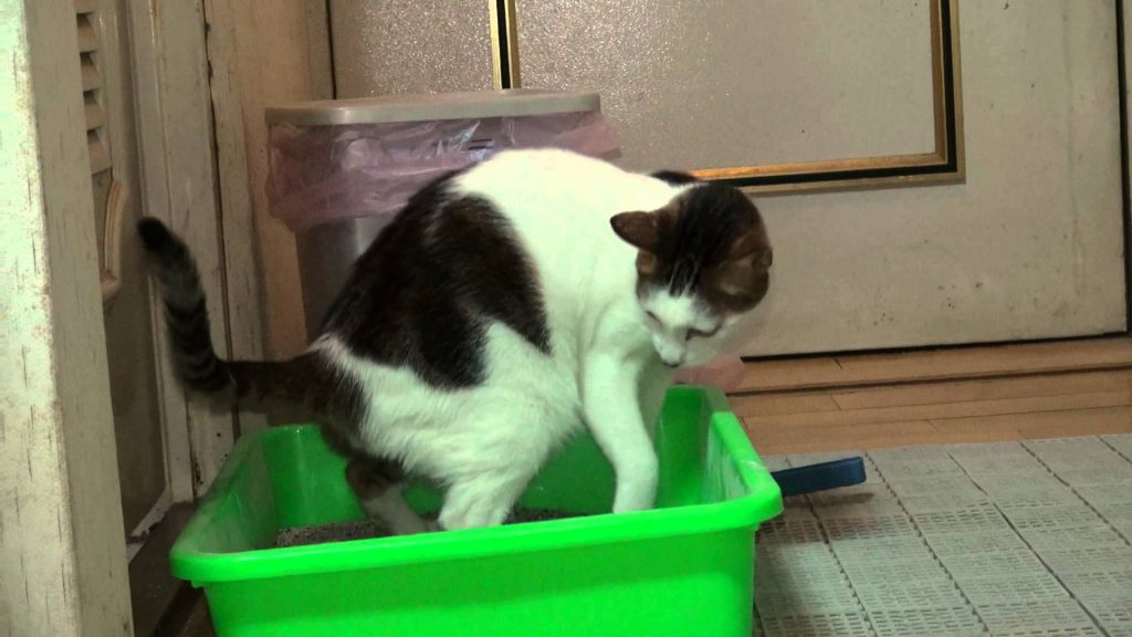cat pooping