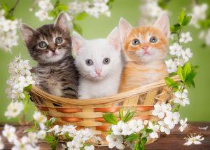 May 2017 Newsletter Kittens