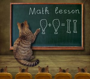 The cat teacher writes a mathematical equation on the blackboard in the classroom.