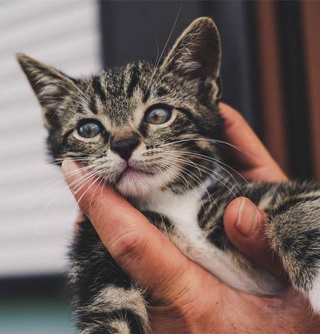 rescue kitten in New Hampshire