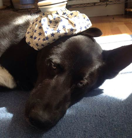help for sick pets in New Hampshire