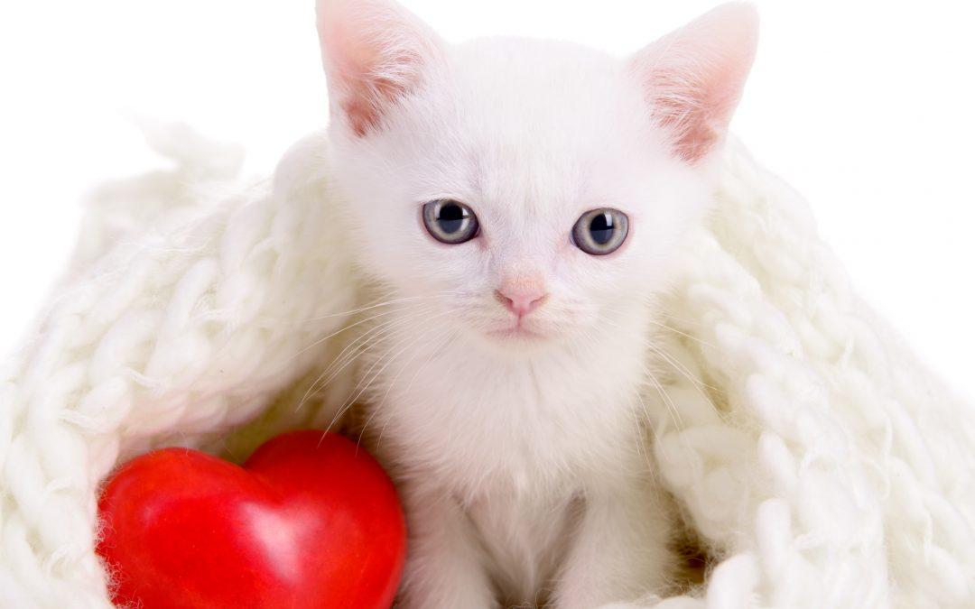 Animal Center & Professional Pet Sitting February 2021 Newsletter
